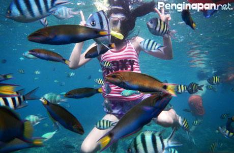Info Penginapan Yang Ada Di Pulau Pari Kepulauan Seribu