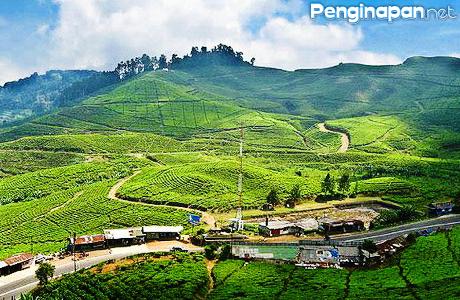 Penginapan Dengan Tarif Terjangkau Di Puncak Pass Bogor