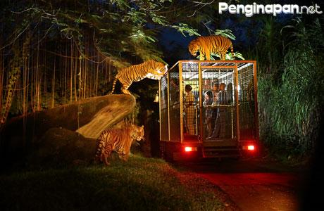 safari-night-taman-safari