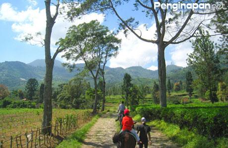 Agrowisata Gunung Mas - www.liburananak.com