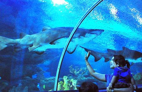 Aquaria KLCC - www.wonderfly.asia