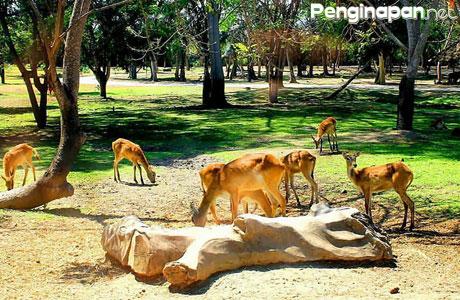 Bali Safari And Marine Park - www.exobali.com