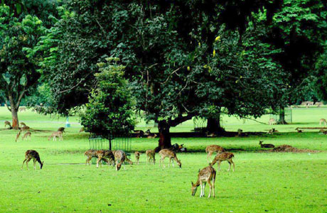 Wana Wisata Penangkaran Rusa Giri Jaya (sumber: lelungan.net)