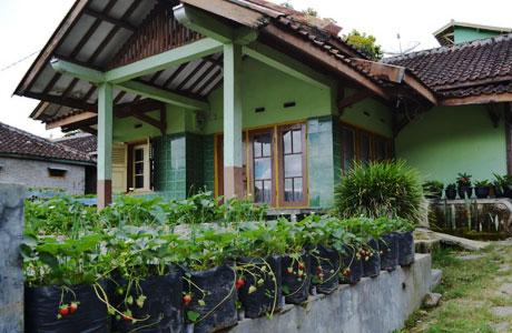 Homestay Ciwidey - hotelciwidey.com