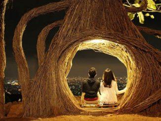 Hutan Pinus Pengger - www.alodiatour.com