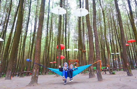 Hutan Pinus Semeru - malangstrudel.com