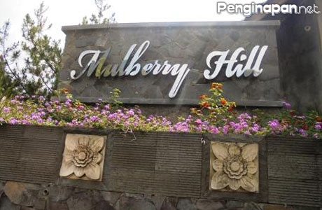 Mulberry Hill - holidayinlembang.com