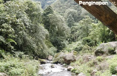 Pepohonan yang Rindang dan Aliran Sungai yang Menenangkan di Coban Pelangi