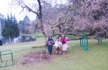 Taman Bunga Sakura Bogor - zoellula.blogspot.com