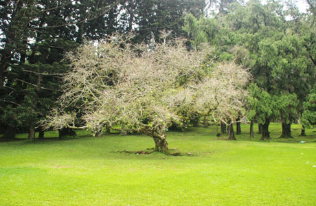 Taman Bunga Sakura Bogor - www.dakatour.com