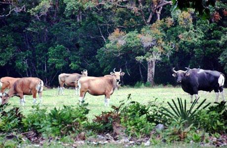 Taman Nasional Ujung Kulon - www.triptrus.com