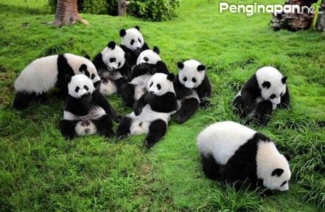 Taman Nasional Wolong China - yinhuadaily.com