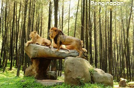 Taman Safari Prigen - www.anucara.com