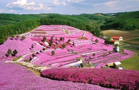 Lokasi Harga Tiket Taman Seribu Bunga Di Berastagi Spot Cantik