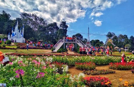 Hamparan kebun bunga di Taman Bunga Celosia (instagram: @saproel_keciel)